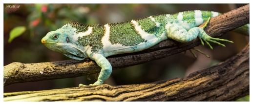 Melbourne Zoo. 5D Mark III | 135mm 2.0L