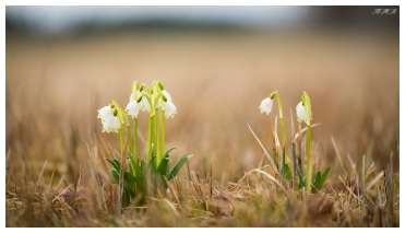 After the long Bavarian winter, the first signs of life begin to appear. 5D Mark III | 180mm 2.8 OS Macro.
