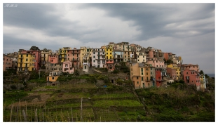 Perched high on the hills, Corniglia is a wonderful destination in Cinque Terre. 5D Mark III | 16-35mm 2.8L II