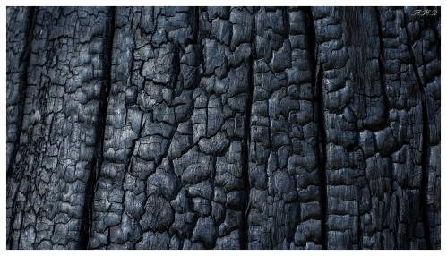 Burnt tree at the Grampians