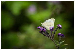 Butterfly at Melbourne Gardens