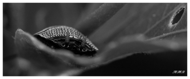 Macro | 7D | 150mm 2.8