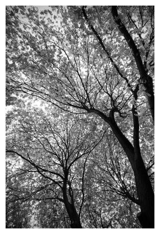 Tree Tops. 5D Mark III | 16-35mm 2.8L II