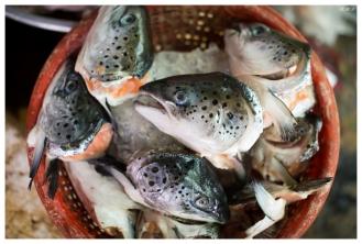 Fish heads anyone? | 5D Mark III | 50mm 1.4