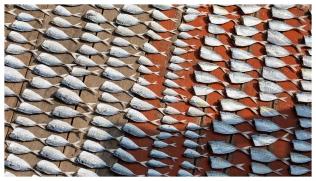 Dried Fish. 5D Mark III | 135mm f2L.