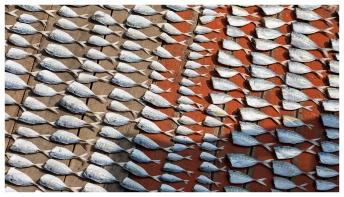 Dried Fish. 5D Mark III   135mm f2L.