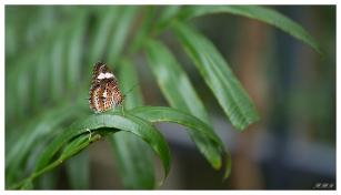 Butterfly. 5D Mark III | 50mm 1.4 Art.
