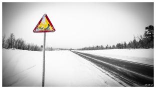 Beware of dog sleds | 5D Mark III | 16-35mm 2.8L II