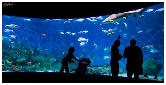 Melbourne Aquarium   7D   16-35mm 2.8L II