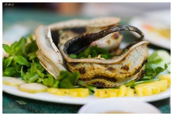 Snake dish | 7D | 50mm 1.4