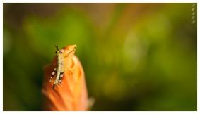 Baby grasshopper | 7D | 150mm 2.8