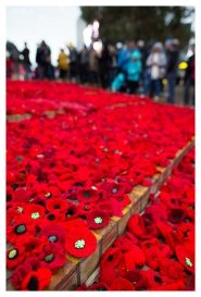 Anzac Day 2015 Poppies, 5D Mark III | 24mm 1.4 Art