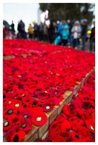 Anzac Day 2015 Poppies, 5D Mark III   24mm 1.4 Art