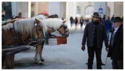 Horses are a romantic way of discovering the city. 5D Mark III   85mm 1.2L II