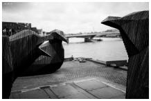 The impressive ply board gulls, Paper Island. 5D Mark III | 35mm 1.4 Art