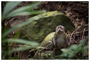 Very cute monkeys is Con Dao national park. Con Dao National park. 5D Mark III | 100-400mm 4.5-5.6L IS II