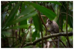 One of the locals, Con Dao National park. 5D Mark III   100-400mm 4.5-5.6L IS II