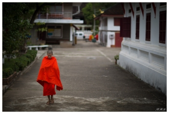 The majestic Monks. Luang Probang, Laos. 5D Mark III   85mm 1.2L II