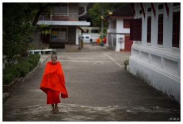 The majestic Monks. Luang Probang, Laos. 5D Mark III | 85mm 1.2L II