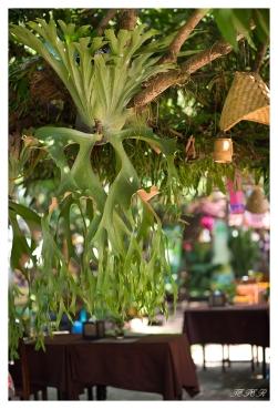 Best cafe deco ever, Luang Prabang, Laos. 5D Mark III | 85mm 1.2L II