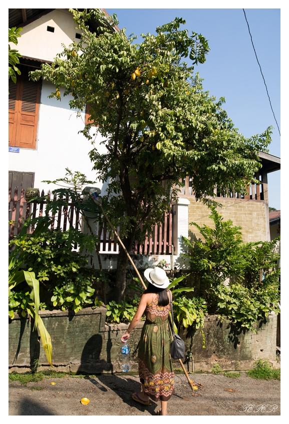 Vanessa helping herself to some star fruit, Laos. 5D Mark III   24mm 1.4 Art