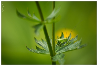 Bavaria. Canon 5D Mark III with 180mm 2.8 Macro