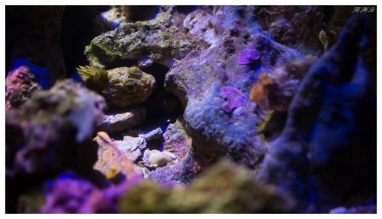 Monaco Oceanographic Museum. Canon 5D Mark III | 35mm 1.4 Art