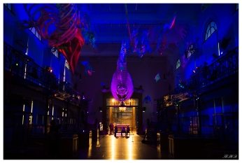A night in the musuem! Monaco Oceanographic Museum. Canon 5D Mark III | 35mm 1.4 Art