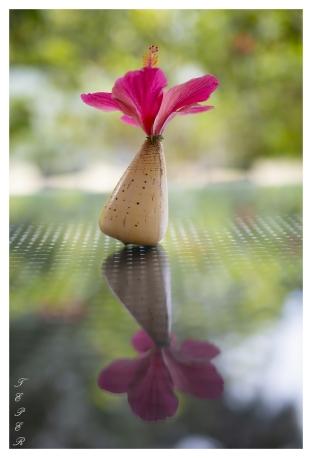 Flower in a Shell, Mahe, Seychelles. 5D Mark III   50mm 1.4 Art