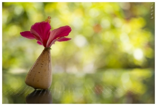Flower in a Shell, Mahe, Seychelles. 5D Mark III | 50mm 1.4 Art