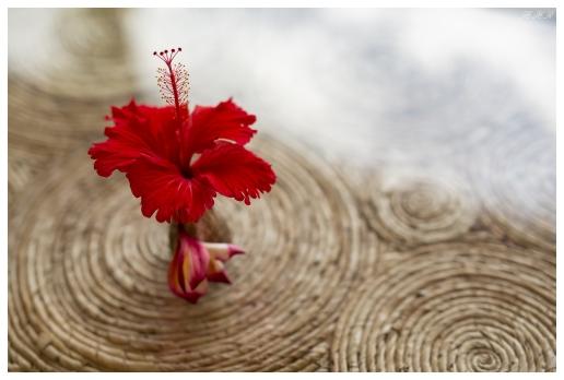 Flower in a Shell, Mahe, Seychelles. 5D Mark III | 50mm 1.4 Art