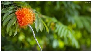 Botanical Gardens, Mahe, Seychelles. 5D Mark III | 85mm 1.2L II