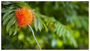 Botanical Gardens, Mahe, Seychelles. 5D Mark III   85mm 1.2L II