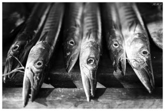 Beautiful fish. Praslin, Seychelles. 5D Mark III   50mm 1.4 Art
