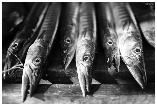 Beautiful fish. Praslin, Seychelles. 5D Mark III | 50mm 1.4 Art