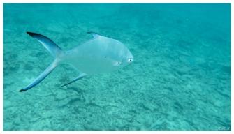 Curieuse, Seychelles. G7X