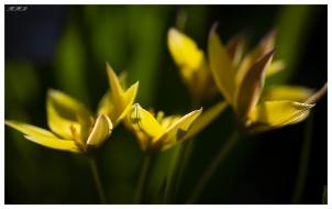 Botanical Garden Munich-Nymphenburg. Canon 5D Mark III | 180mm 2.8 OS Macro