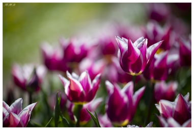 Botanical Garden Munich-Nymphenburg. Canon 5D Mark III | 180mm 2.8 OS Macro