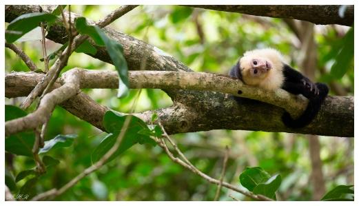 Manuel Antonio National Park, Costa Rica. 5D Mark III | 100-400mm 4.5-5.6L IS II