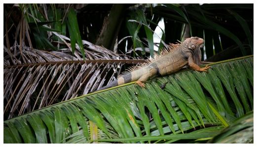 Kokopelli Mangrove Tour, Costa Rica. 5D Mark III | 100-400mm 4.5-5.6L IS II
