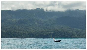 Whale watching, Uvita Costa Rica. 5D Mark III   100-400mm 4.5-5.6L IS II