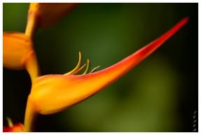 Forest Lodge, Uvita Costa Rica. 5D Mark III | 180mm 2.8