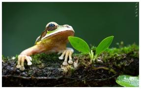 Frogs Heaven, Costa Rica. 5D Mark III | 180mm 2.8 Macro