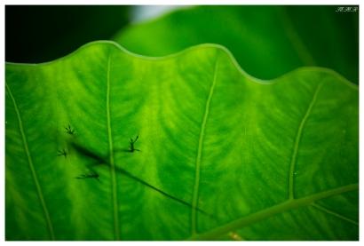 Monteverde Cloud Forest Biological Preserve. Costa Rica. 5D Mark III   100-400mm 4.5-5.6L IS II