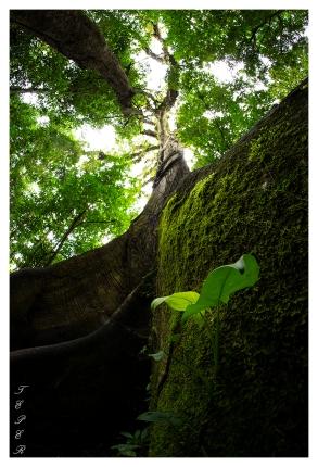 Arenal Volcano National Park, Costa Rica. 5D Mark III | 12mm 2.8 Fisheye