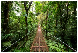 Monteverde Cloud Forest Biological Preserve. Costa Rica. 5D Mark III | 12-24mm 4.0 Art