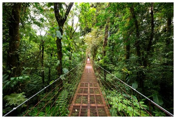 Monteverde Cloud Forest Biological Preserve. Costa Rica. 5D Mark III   12-24mm 4.0 Art