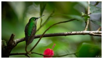 Monteverde Cloud Forest Biological Preserve. Costa Rica. 5D Mark III | 100-400mm 4.5-5.6L IS II