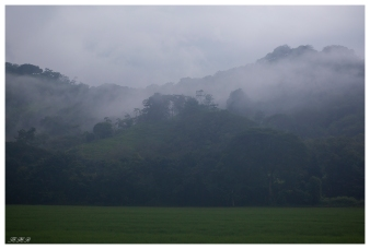 Somewhere in Costa Rica. 5D Mark III | 70mm 2.8 Macro