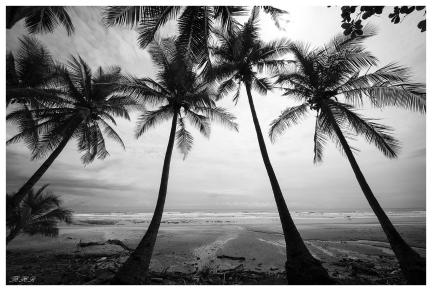 Santa Teresa, Costa Rica. 5D Mark III   12-24mm f4.0 Art